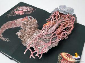 creatures of the deep pop-up book