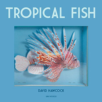 Tropical Fish pop-up David Hawcock