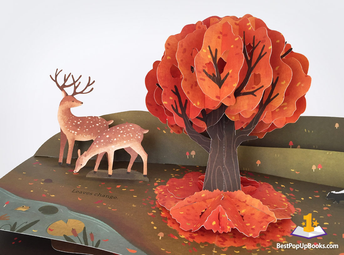 leaves  an autumn pop-up book