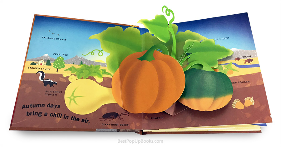 Autumn: A Pop-Up Book